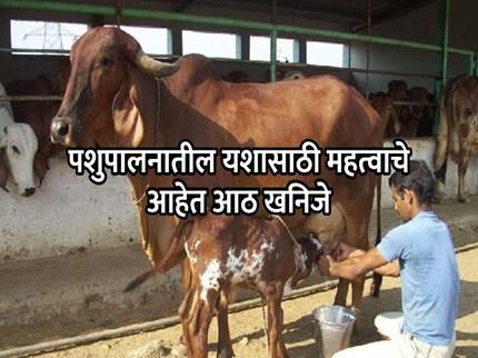 पशुप्रजननासाठी आवश्यक आहेत 'या' गोष्टी; वाढेल दूध उत्पनादनही