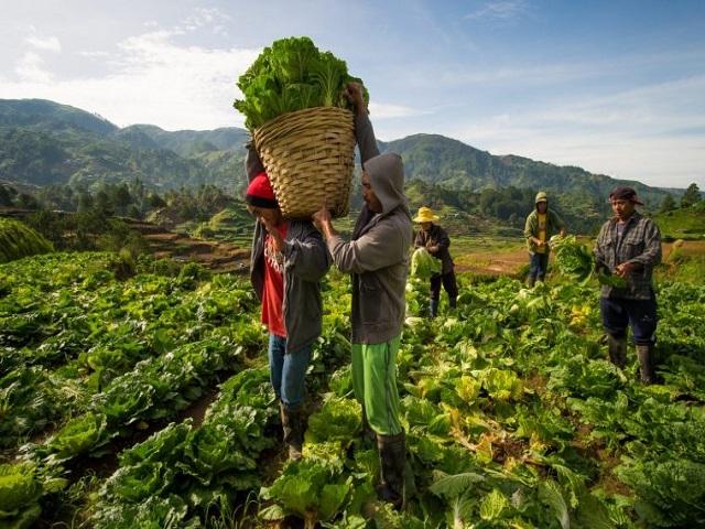 शेतकरी उत्पादक कंपनी तयार करत आहात का? वाचा ! आवश्यक असलेल्या कागदपत्रांची माहिती