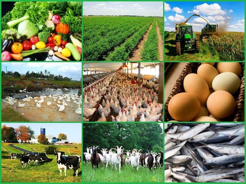 शेतीपूरक उद्योगांना चालना
