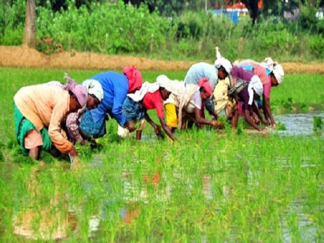 शेतकरी उत्पादक संघटना स्थापन करताना राहिल नाफेडचा समावेश