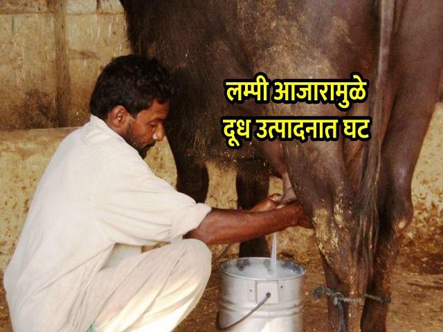 लम्पी आजारामुळे  राज्यातील दूध उत्पादनाला फटका