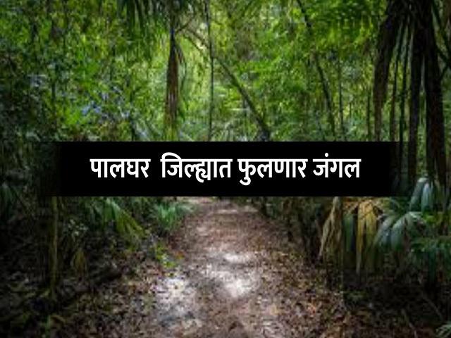 जंगल फुलवण्यासाठी एक लाख  'सीड बॉल्स'चा संकल्प