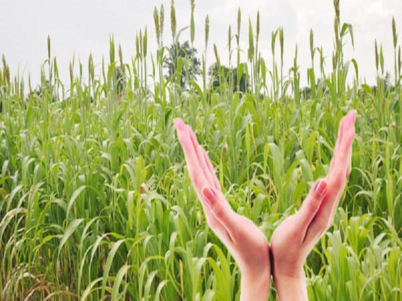 PM crop insurance scheme