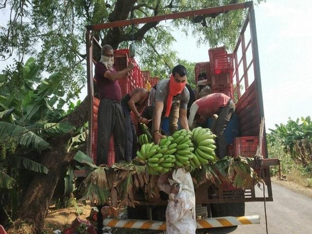 खानदेशातून रोज सहा कंटेनर केळी निर्यात